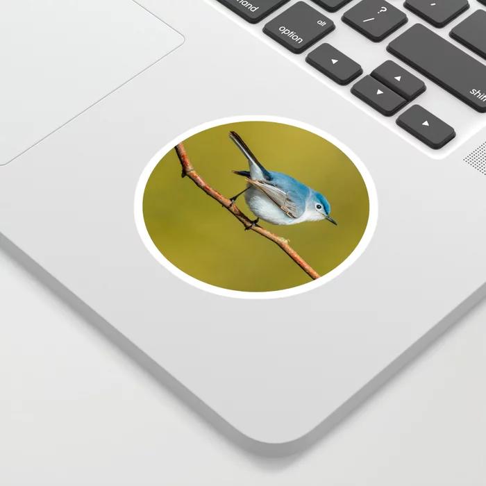 Teeny-Tiny Bird, Blue-Gray Gnatcatcher Photograph Sticker by lovefi