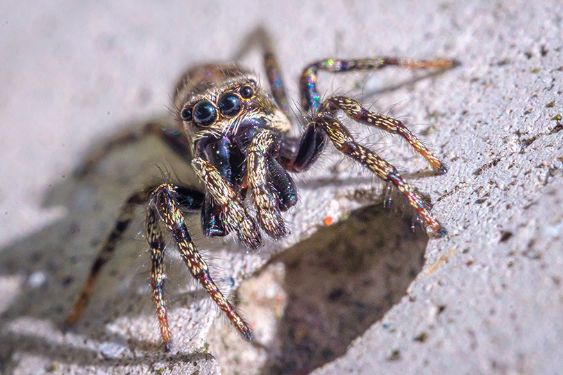 What's Shakin' Spidey? Macro Photograph. By Stephen Geisel, Love-fi