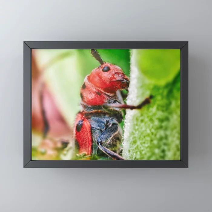 Red Milkweed Beetle Framed Mini Print on Society6