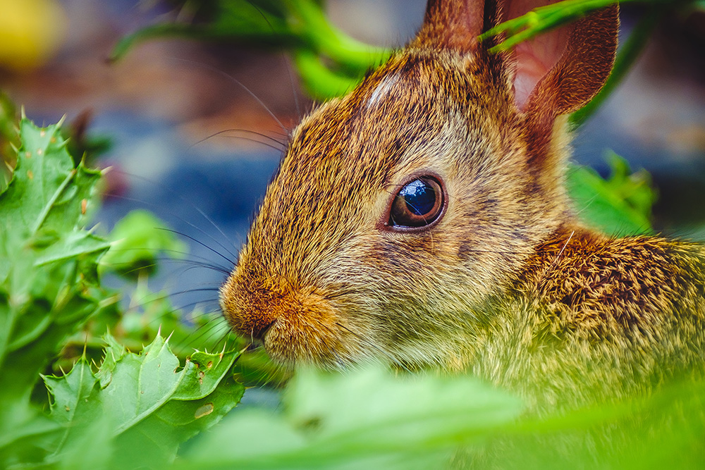 Hungry Garden Bunny. By Stephen Geisel, Love-fi