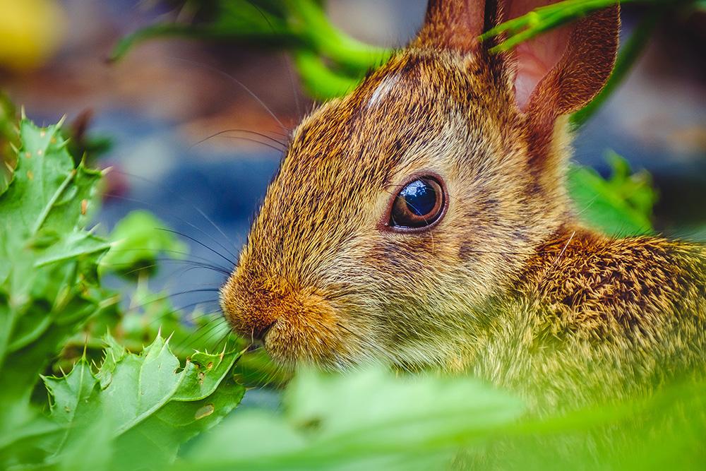 Hungry Garden Bunny. By Stephen Geisel, Love-fi