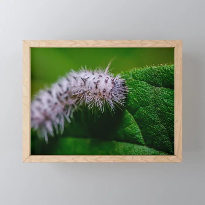 Hickory Tussock Moth Caterpillar. Macro Photo Framed Mini Art Print. On Society6