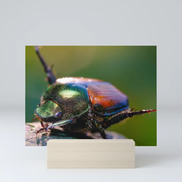 Scarab Beetle Yoga. Macro Photograph Mini Art Print