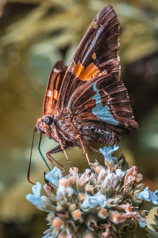 Resting Beautiful Butterfly. Macro Photograph By Stephen Geisel, Love-fi