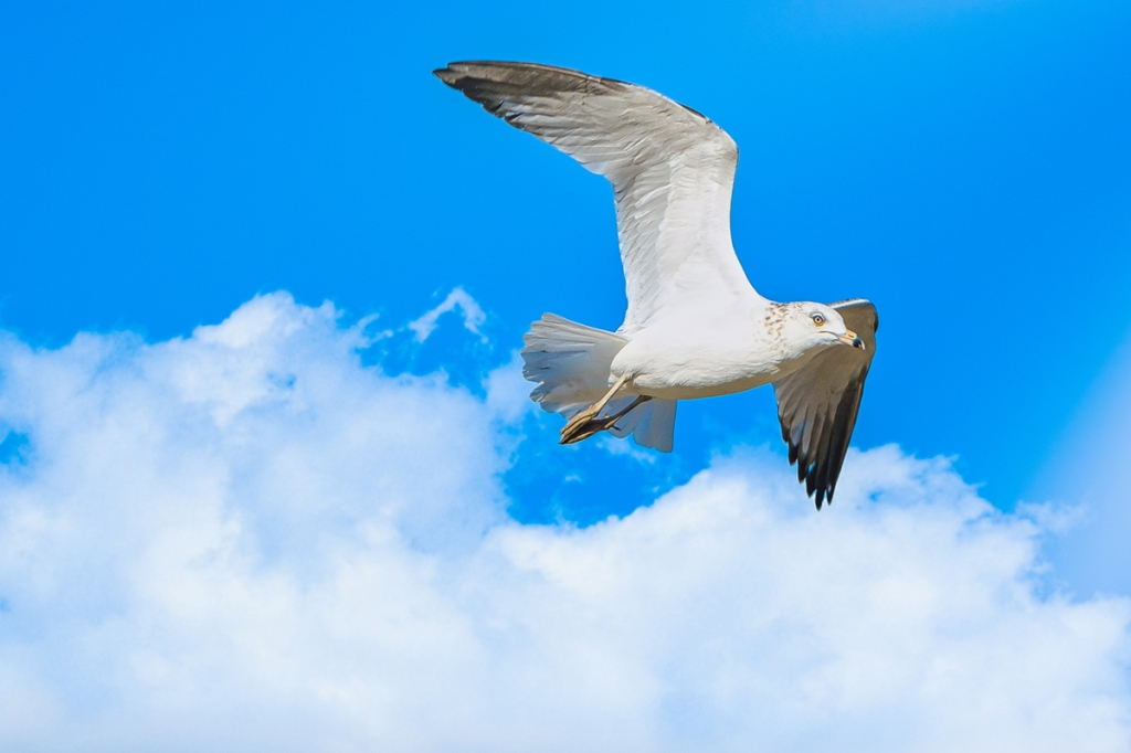 A Seagull Flies Past the Clouds. By Stephen Geisel, Love-fi