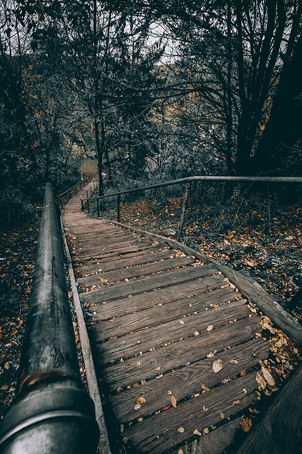 Wooden Trail. By Stephen Geisel, Love-fi