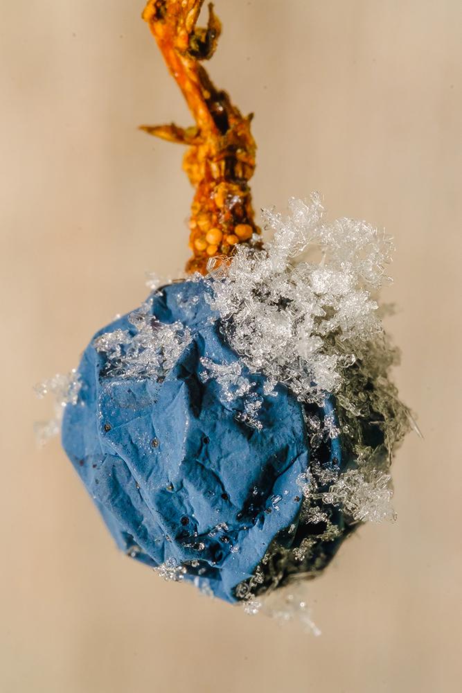 Frozen Wild Berry. Macro Photograph By Stephen Geisel, Love-fi