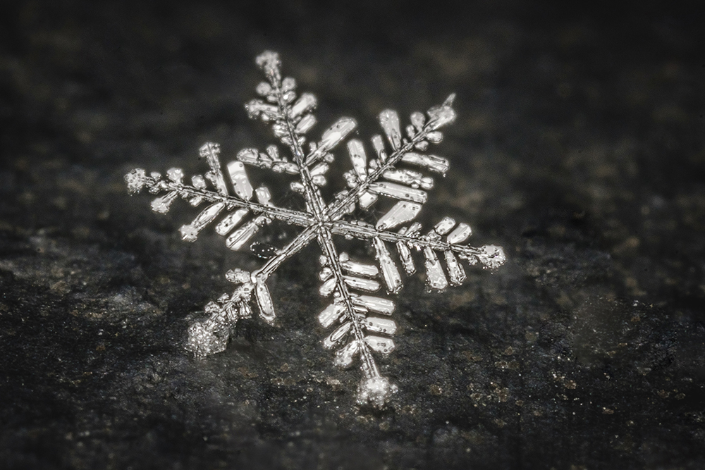 Freshly Fallen Snow Flake. Macro Photography. By Stephen Geisel, Love-fi