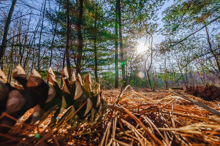 Sun Shines Through. By: Stephen Geisel, Love-fi