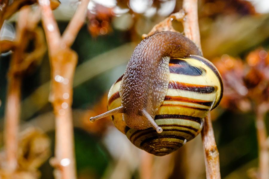 Snail Shell Inspection. By Stephen Geisel, Love-fi