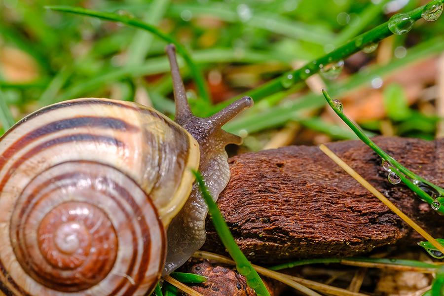 Springtime Snail. By Stephen Geisel, Love-fi