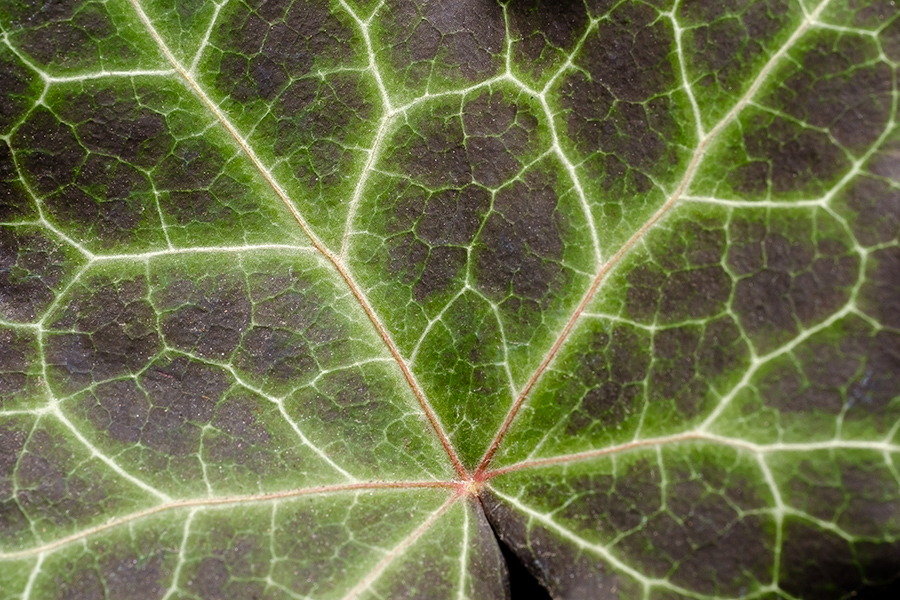 Leaf Lightning. By Stephen Geisel, Love-fi