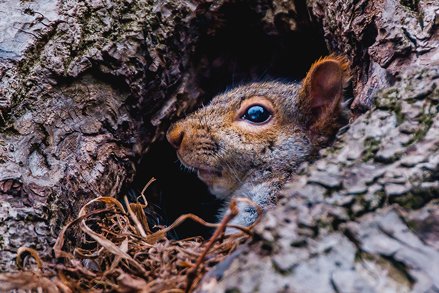 Squirrel At Home. By Stephen Geisel, Love-fi