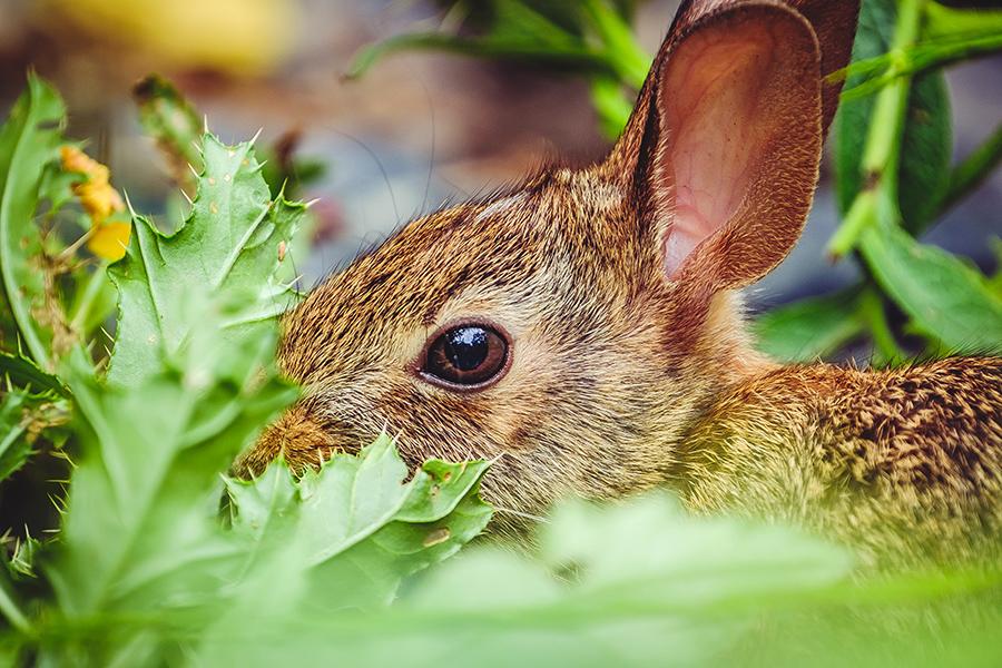 Munchy Bunny Photograph. By Stephen Geisel, Love-fi