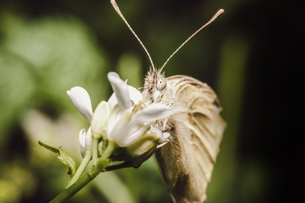 Butterfly Days. Macro Photograph By Stephen Geisel, Love-fi