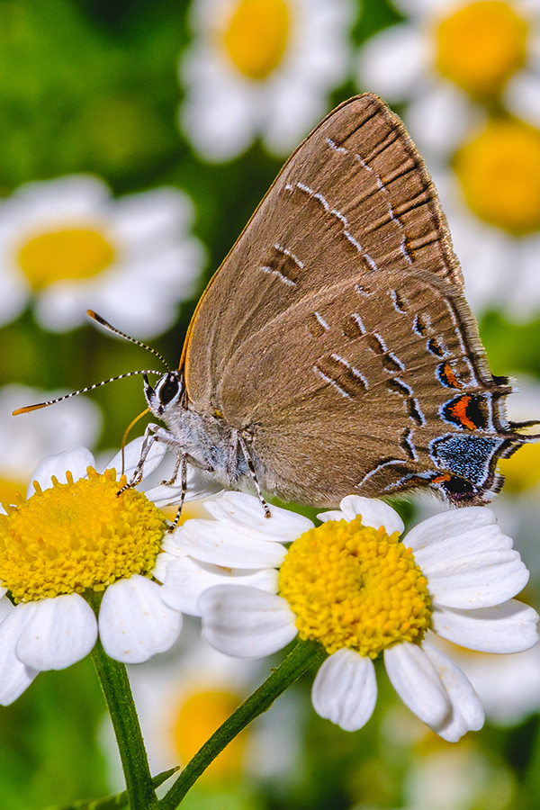 Butterfly Amongst the Flowers Photograph. By Stephen Geisel, Love-fi