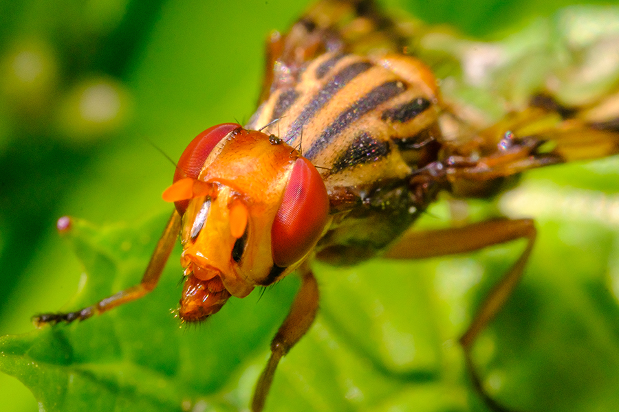 Devilish Insect. By Stephen Geisel, Love-fi