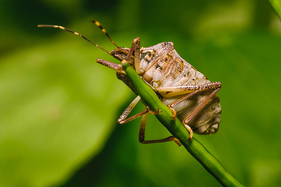 Take a Great Leap. Macro Insect Photograph. By Stephen Geisel,love-fi