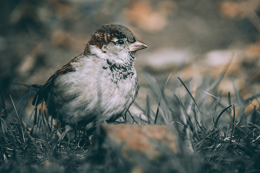 Cute Little Bird Searching for Food Photograph. By Stephen Geisel, Love-fi